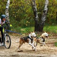 Чук,Гек и спортсмен Даник на драйленде «По следам желтых листьев-2015»