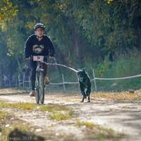 Миша на велосипеде и Надя на своих четырех, Осенний драйв в Троицке