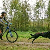 Драйленд «Осенний Драйв», Троицк, Женя и собака Надя на втором этапе двухдневного байкджоринга