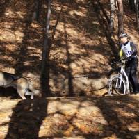 Чук и его хозяин на скутере, драйленд «По следам желтых листьев» в Лыткарино, 2013 год