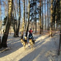 Таня, Чук и Гек на гонке «Созвездие Волка», 2015 год