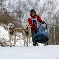 Таня на нартах с Чуком и Геком на юниорской гонке