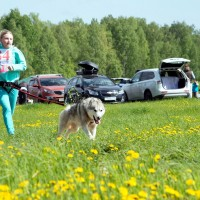 Тигра пробежал еще и с Полиной Кучеба